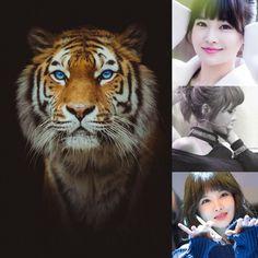 ChineseZodiac&KPOP // Tiger // Boram of t-ara