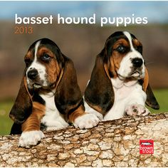 Basset Hound Puppies Mini Wall Calendar: Big loving eyes and long soft ears make Basset Hound Puppies irresistible to snuggle, which is great since they quite enjoy napping. But they're not lazy. Basset puppies are full of wonder, curiosity, and mischief.  $7.99  http://calendars.com/Basset-Hounds/Basset-Hound-Puppies-2013-Mini-Wall-Calendar/prod201300004561/?categoryId=cat10022=cat10022#