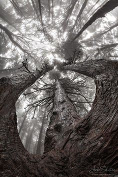 ~~Into the Mist ~ mystical forest, Sintra, Portugal by Joel Santos~~