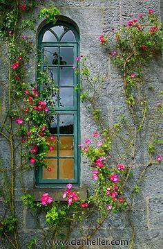 Janela estreita em arco e rosas trepadeiras.