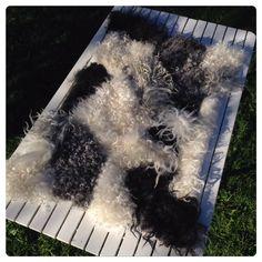 Äntligen har sommarvärmen kommit även till Jämtland! Då får man passa på att tova utomhus, och ta sig an ullen som klipptes i våras. Vinterull, som klipps på våren, anses ofta vara av sämre kvalite…
