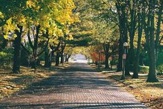 This is how I remember Champaign, Illinois, my boyhood home. Brick streets. Classic street lights. Fall leaves. I can picture myself riding my  bike ...