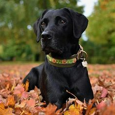Happy #ThirstyThursday pals! And yes these leaves are almost as gorgeous as myself, but no one drinks leaf lattes ☕ I will have a #Puppachino  Thanks for using our tag Junior and for being FabLabulous!  #Repost @junior_the_copenhagen_lab • • •  Want to be featured? Simply follow @fab_labs_ and use our hashtags: #fab_labs_  #fablabs #FLPWetWednesday to your daily posts!! ・・・  Stay #ThirstyThursday Furiends