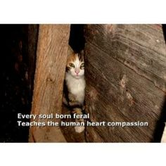 Have Compassion. Spay & Neuter a Feral Cat. Trap-Neuter-Return (TNR) Works. More info at www.alleycat.org