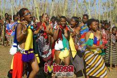 """Cận cảnh tập tục """"nhảy sậy tuyển vợ"""" tại vương quốc Swaziland - http://www.iviteen.com/can-canh-tap-tuc-nhay-say-tuyen-vo-tai-vuong-quoc-swaziland/  Lễ hội Umhlanga tại vương quốc Swaziland hàng năm thu hút tới hàng vạn trinh nữ tham dự với hi vọng """"đổi đời"""".       Tại vương quốc Swaziland thuộc Châu Phi, hàng năm có tới hàng chục ngàn trinh nữ từ mọi ngõ hẻm của đất nước"""