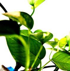 Photo by Federico Poletti #design #green #free #nature