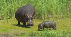 BIG 5 Animals on Wildlife Safaris in South Africa Kruger National Park Safari, African Holidays, Online Travel Agent, Wildlife Safari, Big 5, Group Travel, Vacation Packages, African Safari, Holiday Travel
