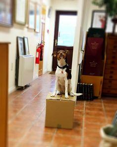 Meet Jack! Meet, Dogs, Doggies, Pet Dogs, Dog
