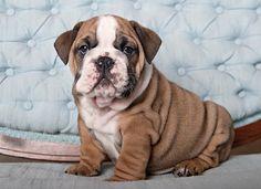 My baby boy @ 8 weeks old!!!  Love his wrinkles!