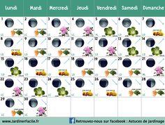 Calendrier lunaire Juin 2020 : jardiner avec la lune