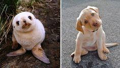 <p>What if we told you that marine animals are really just like the puppies of the ocean? Would that change how you think about the amount of plastic trash you generate?</p>