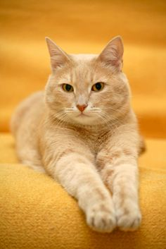 Beautiful orange cat (Bing Images)