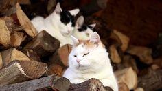 薪の上の猫 171121