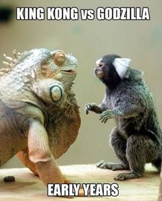 King Kong vs Godzilla - Bottled by Angel Valdez King Kong Vs Godzilla, Godzilla Vs, Unusual Animal Friendships, Unusual Animals, Beautiful Creatures, Animals Beautiful, Iguana Verde, Animal Pictures, Funny Pictures