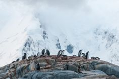 Get on your feet and experience Gentoo Penguins on a Hill in Port Lockroy, Antarctica.