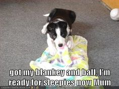 got my blankey and ball, I'm ready for sleepies now Mum...............................  Picture via Cheezburger, caption by me