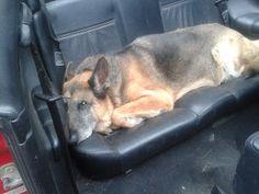 Max chillin in the cabriolet