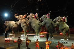 The last show will take place in May 2017. The Ringling Bros to close at last!