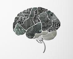 the human brain - Google Search