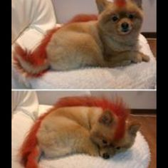 Fire fox. I want one!