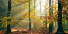 Sinfonia Della Foresta - You're welcome to visit my new website @larsvandegoor.com