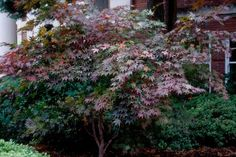 Looking for a tree to provide some curb appeal? Get inspired with these choices.