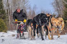 Dog Sledding | Endurance Kennels LLC