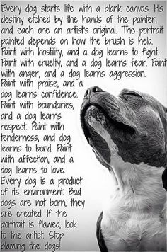 Couldn't agree more. Stop blaming the dogs!