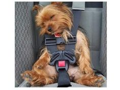 18 Ridiculously Easy Travel Hacks That Will Change How You Travel With Your Pup
