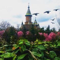 Timisoara, Romania Timisoara Romania, World, Building, Travelling, Inspire, Painting, Inspiration, Lifestyle, Biblical Inspiration