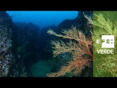 """España protegerá el 8% de la superficie marina.  Proyecto LIFE11 INF/ES/000683 """"Natura 2000: an oportunity for everyone"""" (Proyecto LIFE+ INFONATUR 2000).Cofinanciado por el instrumento financiero Life+.  Difundir el significado y los valores de la Red Natura es el objetivo del proyecto Life+ """"Infonatur"""" que coordina la Junta de Extremadura, y en el que participan la Diputación de Lérida, el Patronato de Turismo de Gerona-Costa Brava y la Agencia EFE (EFEverde)."""