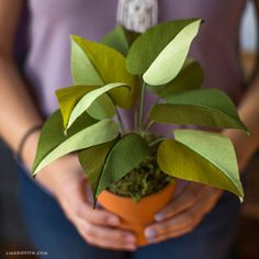 Potted Crepe Paper Philodendron