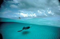 Bajo el agua (y fuera de ella)  Os presentamos una selección de instantáneas del fotógrafo de la naturaleza David Doubilet.  El motivo común de esta selección, entre su ingente obra, es la composición perfectamente medida del mundo submarino con aquello que se puede en la superficie.