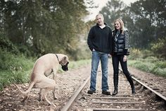 Hahahaha puppy doing his business during the photo shoot Funny Engagement Photos, Engagement Session, Wedding 2017, Puppies, Photoshoot, Couples, Photography, Business, Cubs