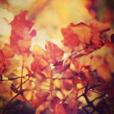 Entramos en el mes en el que se caen las hojas... ¡Bienvenido Octubre!   #ideassoneventos #sinfiltros #blog #bloglovin #organizacióndeventos #comunicación #protocolo #imagenpersonal #bienestarybelleza #decoración #inspiración #bodas #buenosdías #goodmorning #miércoles #wednesday #felizdía #nuevosmes #octubre #october #otoño #hojas #caídadelashojas #árboles #marrón #tonostierra #autumn #nofilters
