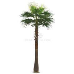 TAHSD-7 Artificial Washington Palm Tree Made in Guangzhou China