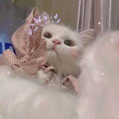 Adorable Cute Animals, Super Cute Animals, Cute Baby Cats, Cute Cats And Kittens, Cute Little Animals, Cat Profile, Cute Cat Wallpaper, Cat Dog, Cat Aesthetic