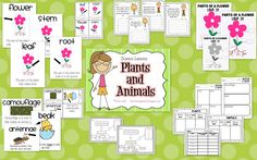 Life in First Grade: New Science Unit (Plants and Animals)
