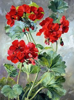 Geraniums | Mill House Fine Art – Publishers of Anne Cotterill Flower Art