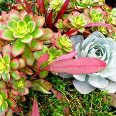 Designing & caring for succulent container gardens
