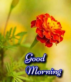Sweet Good Morning Images, Good Morning Friday Images, Good Morning Friends Images, Good Morning Beautiful Pictures, Good Morning Happy Sunday, Good Morning Cards, Good Morning Gif, Good Morning Picture, Good Morning Greetings