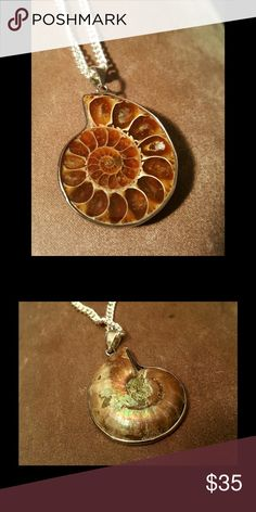 Ammonite Necklace Genuine ammonite necklace. Got this beautiful fossil at a random shop in the middle of no where in Arizona. The back of the shell changes colors in light, it has a rainbow tint when moved around in light. Beautiful red, brown, and white coloring. The necklace can be made at any length, short, long, however you like just let me know in the comments :) Creation Central Jewelry Necklaces