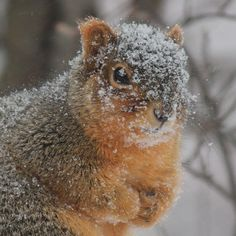 Squirrelly Face Photo Print by LittleBrownDoogPhoto on Etsy, $10.00