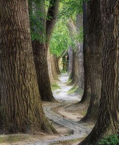 Photogenic tree tunnel with the perfect winding pathway in Regensburg, Germany. Photo by Explore. Tree Tunnel, Forest Path, Tree Forest, Tree Photography, Wildlife Photography, Parcs, Pathways, Garden Paths, Beautiful Landscapes