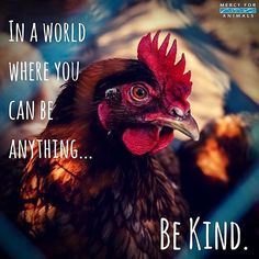 """there is no such thing as """"kind"""" exploitation and """"kind"""" irreverence for life. go vegan."""