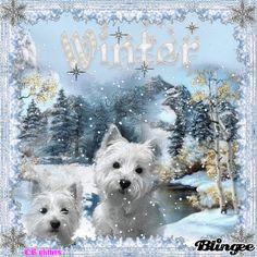 Winter Westies