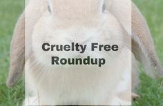 An in depth update of everything that's happening in the cruelty free world and the progress being made on all fronts