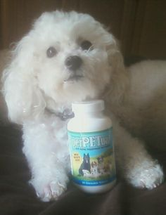 Www.artofmindfulness.my90forlife.com #youngevity Smart pups love Youngevity