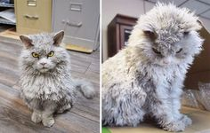 20 Cute Photos Of The Fluffiest Cats In The World.