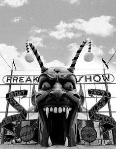 161 Best - American Horror Story - images   American horror